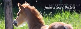Duktig hästfotograf